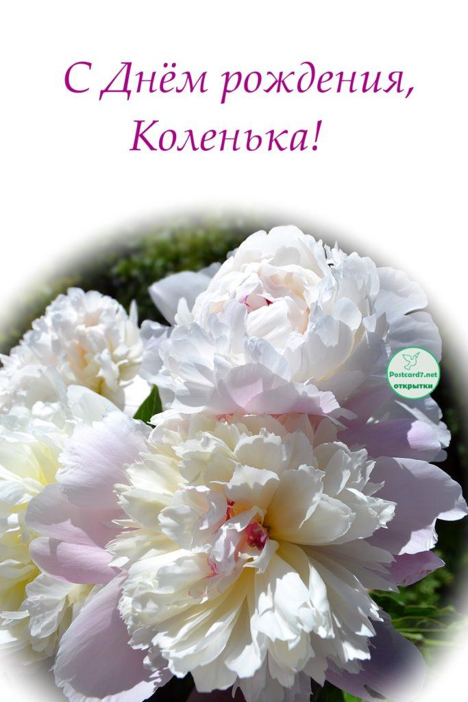 С Днём рождения, Коленька, пионы