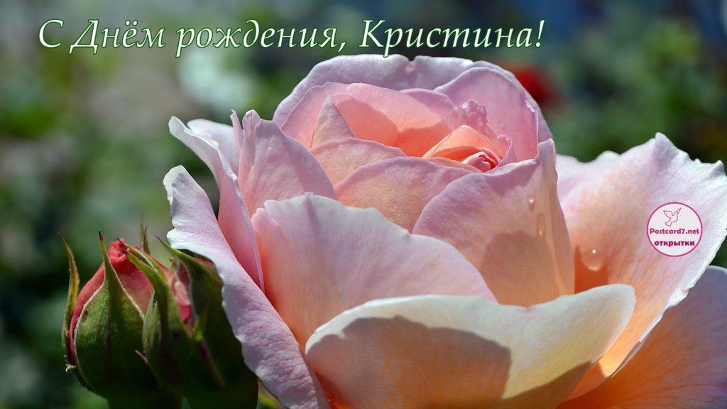 Красивая роза - открытка в День рождения для Кристины