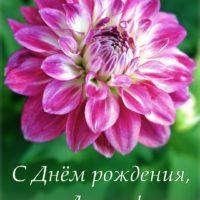 Яркий георгин - открытка Ларисе с Днём рождения.