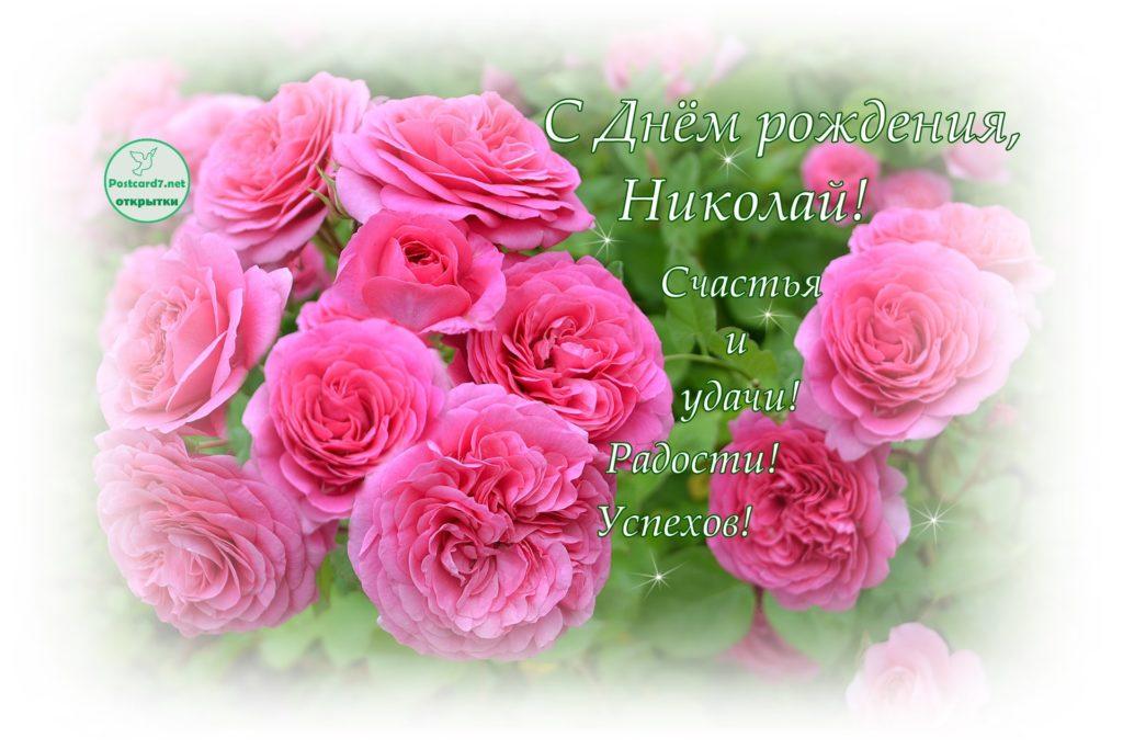 Открытка для Николая с Днём Рождения, розовые розы
