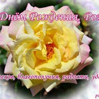 С Днём Рождения, Роза