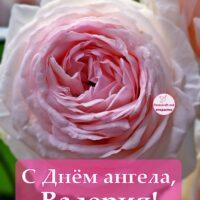 С Днём ангела, Валерия; открытка с розой