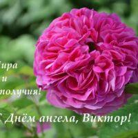 С Днём ангела, Виктор; открытка с розой