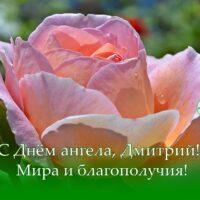С Днём ангела, Дмитрий; открытка с розой