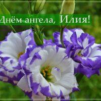 С Днём ангела, Илия; открытка с цветами