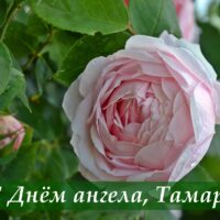С Днём ангела, Тамара; открытка с розой