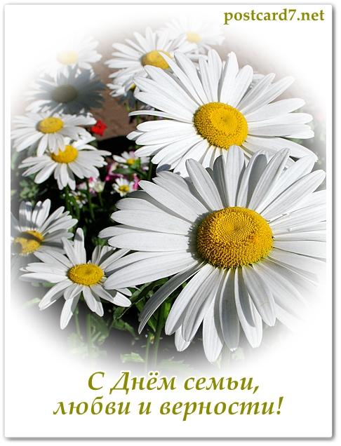 Всемирному дню, открытки с ромашкой день семьи