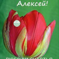 Яркий тюльпан. Открытка для Алексея в День рождения