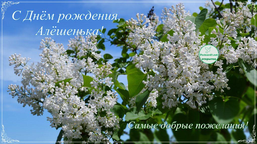 С Днём рождения, Алёшенька, белая сирень, открытка
