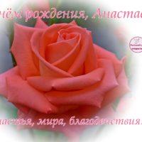 С Днём рождения, Анастасия, открытка с розой