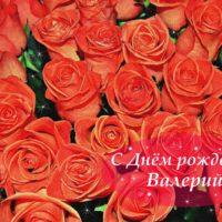 С Днём рождения, Валерий, оранжевые розы