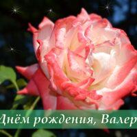 С Днём рождения, Валерия; открытка с розой
