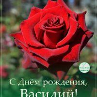 С Днём рождения, Василий; открытка с розой