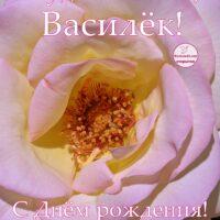 Будь счастлив, Василёк; С Днём рождения, открытка