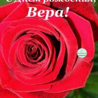 С Днём рождения, Вера; открытка с розой