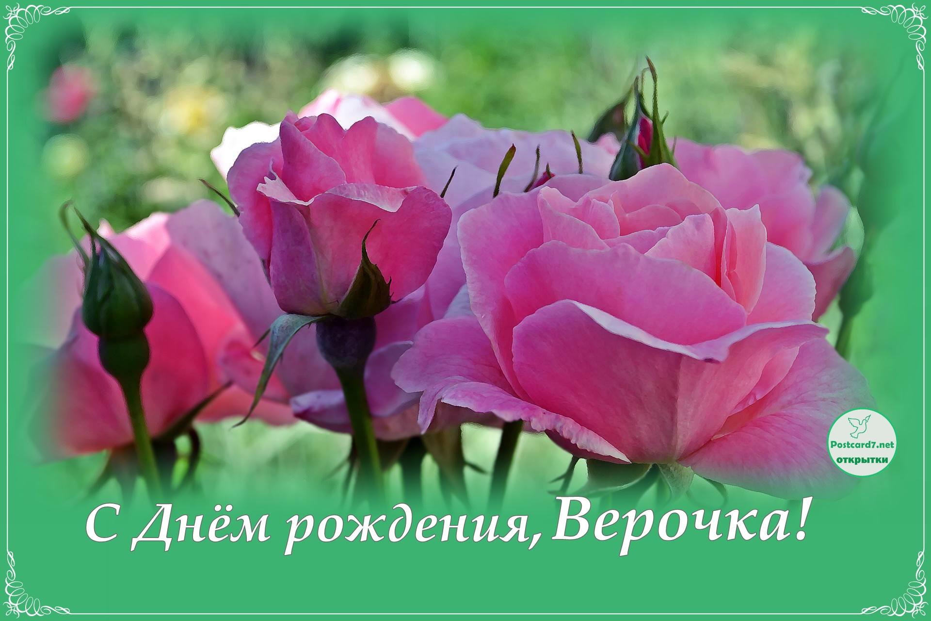 Розовые розы, открытка. С Днём рождения, Верочка