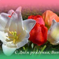 С Днём рождения, Виталий, открытка, яркие тюльпаны