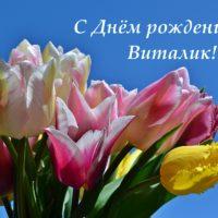 С Днём рождения, Виталик, открытка, тюльпаны