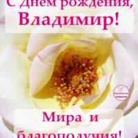 С Днём рождения, Владимир; открытка с розой