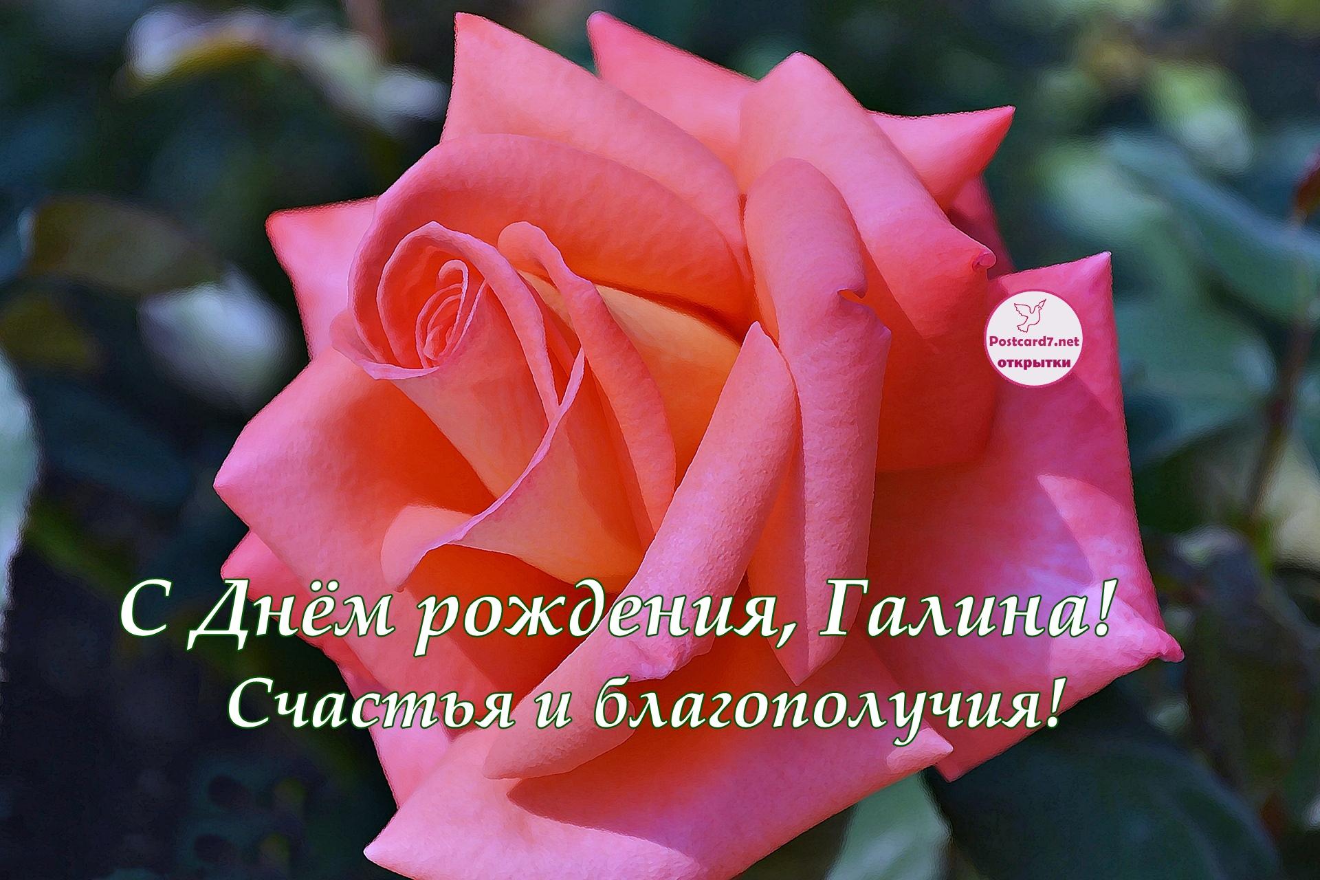 С Днём рождения, Галина; открытка с розой