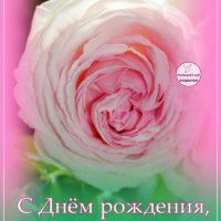 С Днём рождения, Галина, открытка с розой