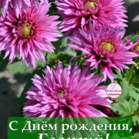 С Днём рождения, Георгий; открытка с георгинами