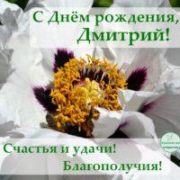 С Днём рождения, Дмитрий; открытка с цветком древесного пиона