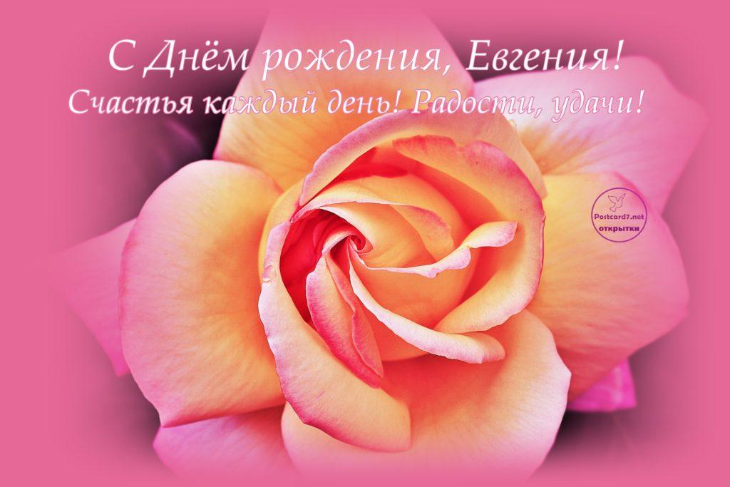 С Днём рождения, Евгения, открытка с розой