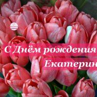 С Днём рождения, Екатерина; букет тюльпанов, открытка