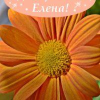 Оранжевый цветок. Открытка. С Днём рождения, Елена