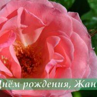 Роза, открытка для Жанны в День рождения