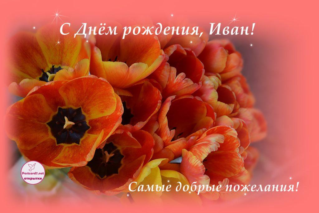 Открытка с Днём рождения для Ивана - Букет тюльпанов.