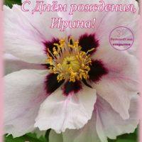 С Днём рождения, Ирина; открытка для Ирины