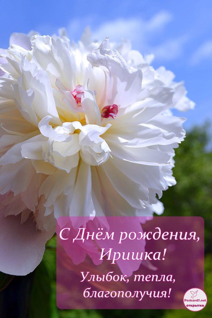 Пион - открытка для Ирины - с Днём рождения