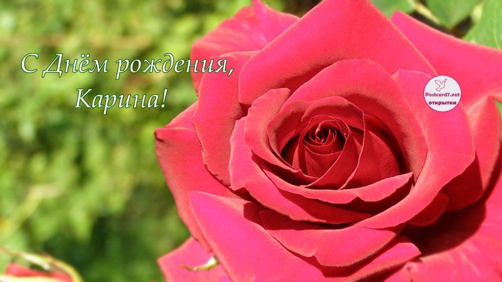 С Днём рождения, Карина, открытка, роза