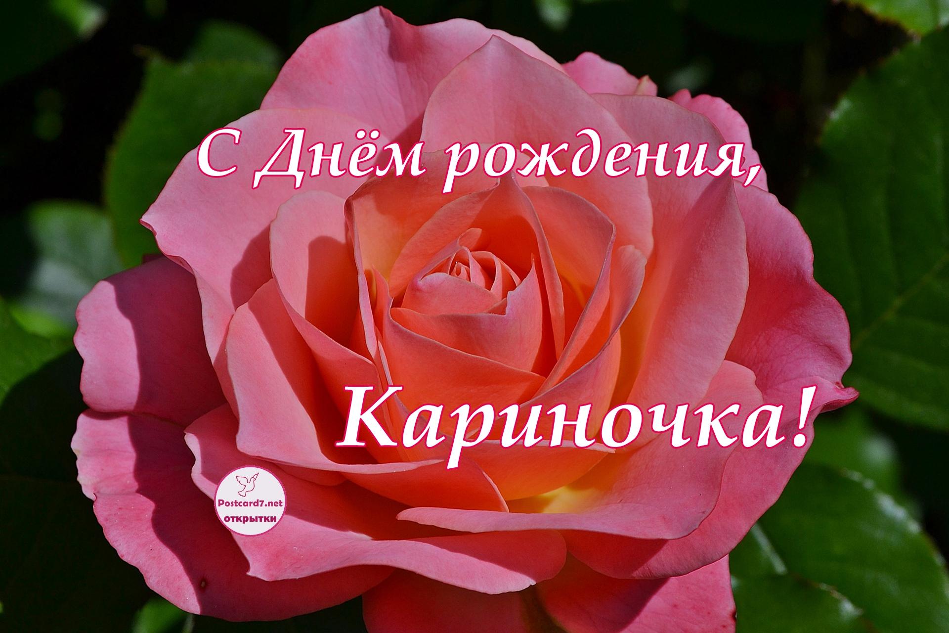 С Днём рождения, Кариночка; открытка с розой
