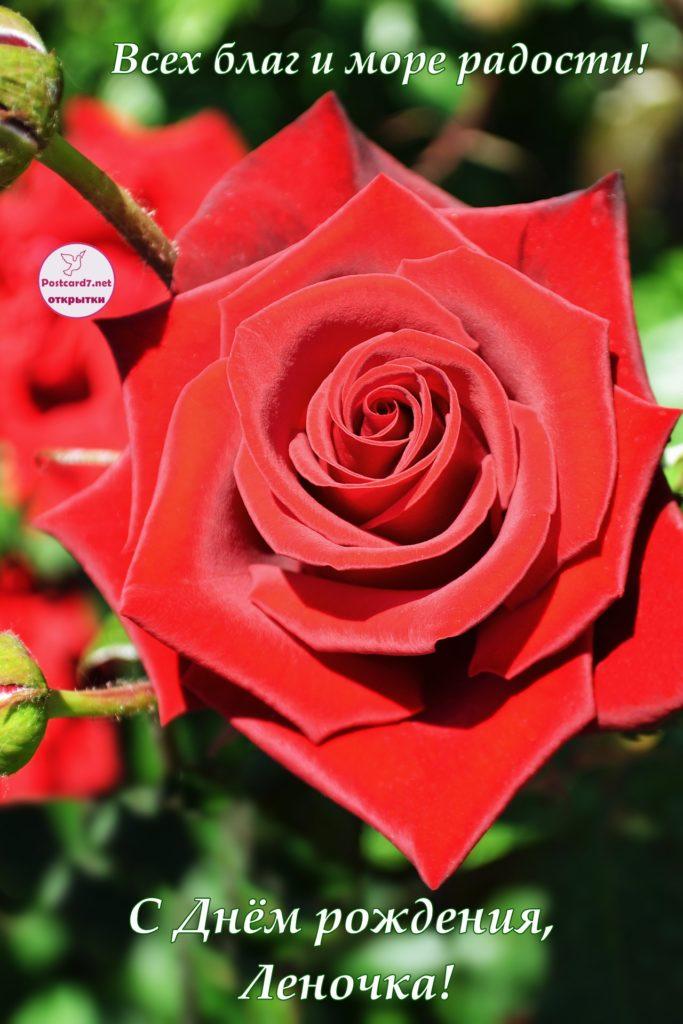 Открытка - Красная роза. С Днём рождения, Леночка! всех благ и море радости!