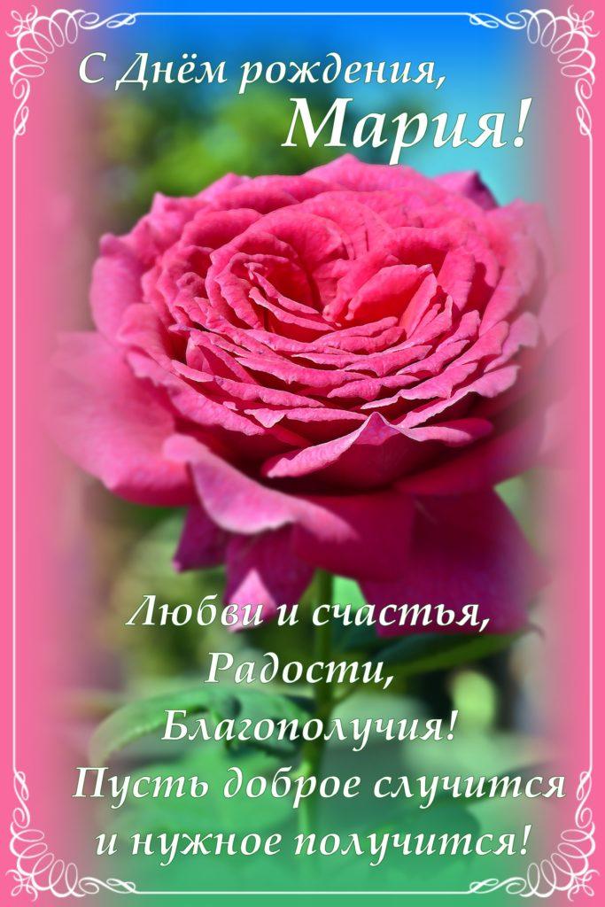 Открытка с розовой розой для Марии в День рождения