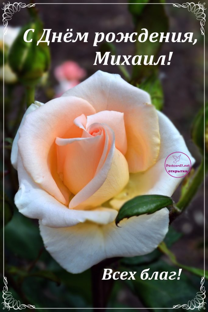 С Днём рождения, Михаил, открытка с розой