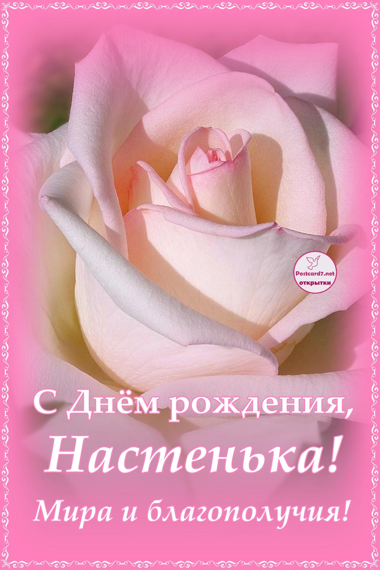 С Днём рождения, Настенька; открытка с розой