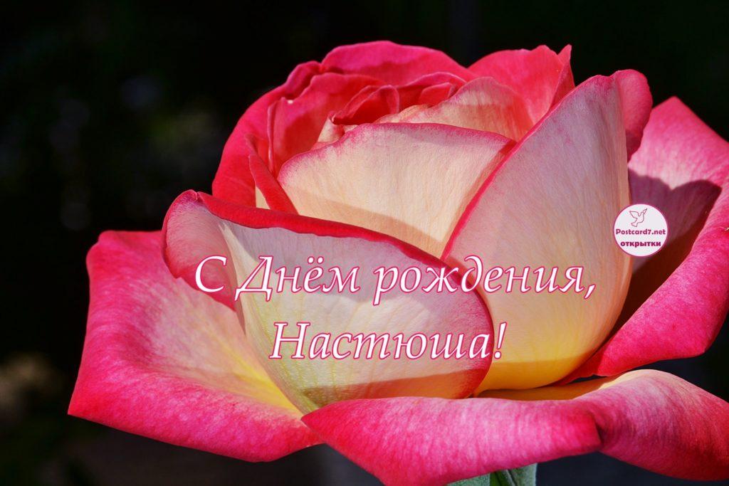С Днём рождения, Настюша, открытка с розой