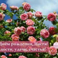 С Днём рождения, Настя; открытка с розами