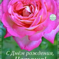 С Днём рождения, Наташа, открытка, роза