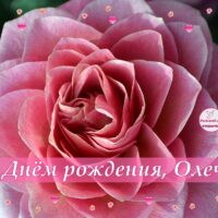 С Днём рождения, Олечка! Открытка с розой