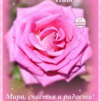 С Днём рождения, Павел, открытка, роза