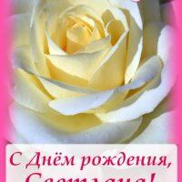 С Днём рождения, Светлана; открытка с розой
