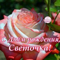С Днём рождения, Светочка; открытка с розой