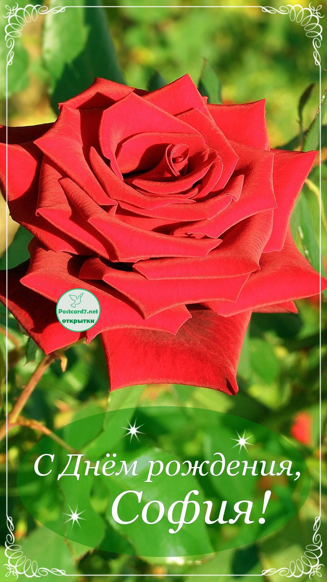 оргстекла отличается, поздравления с днем рождения именные софия аромата