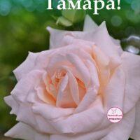 С Днём рождения, Тамара; открытка с розой