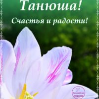 С Днём рождения, Танюша! Открытка с тюльпаном.